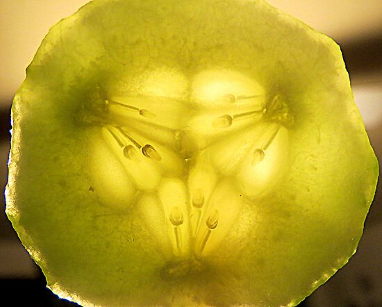 Cucumber Center...Macro by Diane Arndt