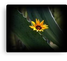 Beautiful Parasite Flower On An Agave Canvas Print
