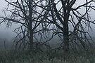 Forest Skeletons by April Koehler