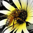 bees  by amberrobertson