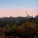 Warrumbungle National Park, NSW, Australia. by Andy Newman