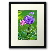 A Lilac Aster Framed Print