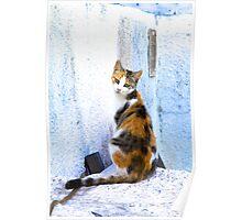Cat in Fira Poster