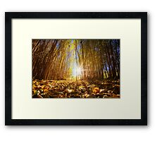 Fall Begins Framed Print