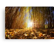 Fall Begins Canvas Print