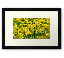 Floriade in Yellow Framed Print