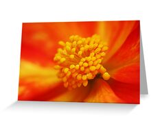 Begonia heart macro Greeting Card