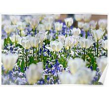 Favourite Floriade Garden Poster