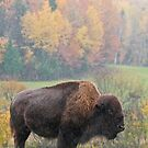 Bison - Thunder Beast Of North America by Michael Cummings