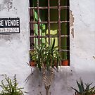 A window in Ibiza town. by naranzaria