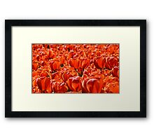 Floriade in Red Framed Print
