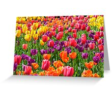 Vibrant Beauties in Full Sun Greeting Card