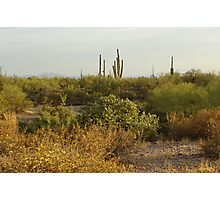 Out In The Desert  Photographic Print