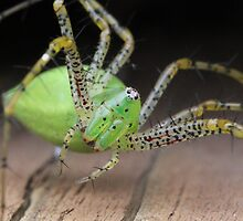 Itsy Bitsy Spider by Paul Sturdivant