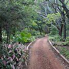 Garden Path by Paul Sturdivant