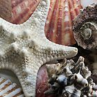 Pretty Shells by Paul Sturdivant