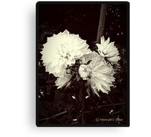 Beautiful Dahilas  Canvas Print