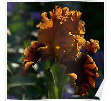 Sunset Iris - Glowing Amber And Bronze Poster