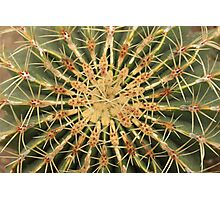 Cactus Spiral Pattern Photographic Print