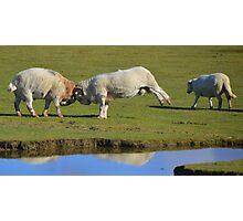 Battering Rams Photographic Print