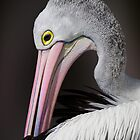 Portrait of a pelican by Jan Pudney