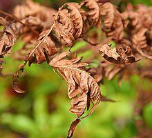 Brown Ferns by Eileen McVey