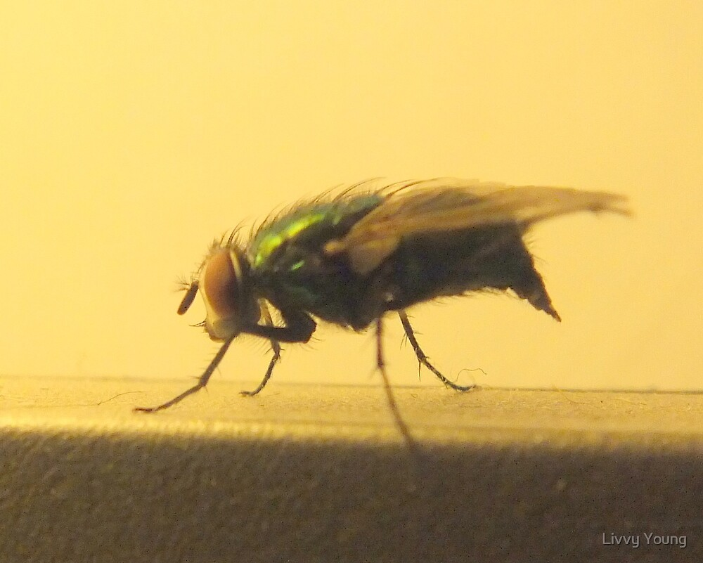 Annoying Fly. by Livvy Young
