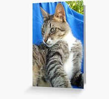 Tabby Cat Against Blue Cloth Background Greeting Card