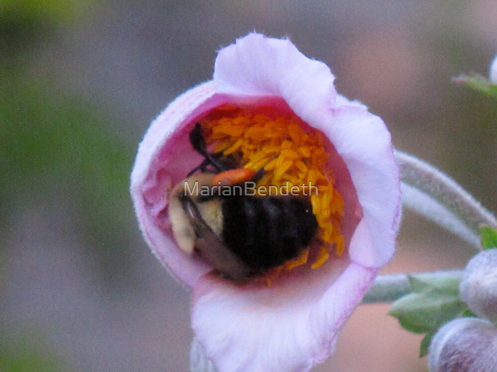 The flower and the bee love affair by MarianBendeth