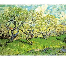 Orchard in Blossom. Vintage floral garden oil painting by Vincent van Gogh. Photographic Print
