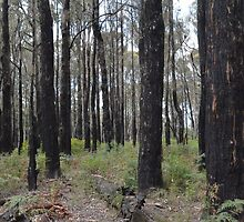 Burnt Trunks - Kinglake Victoria by PaperRosePhoto