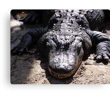Hungry Gator Canvas Print