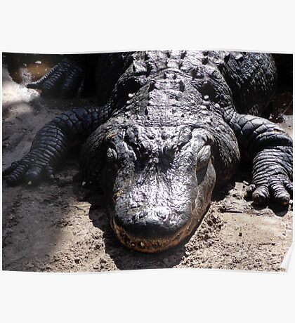 Hungry Gator Poster