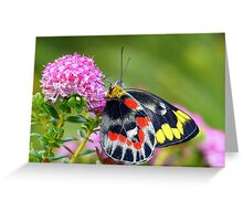""""""" Delias harpalyce """"   { Butterfly Marlo } Greeting Card"""