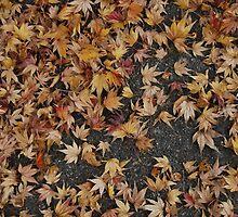 Fall by ianyoshio