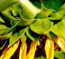Nodding Yellow Head by turtlemull