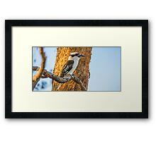 Look, A Kookaburra Framed Print
