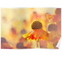 Sunlit Helenium Flowers with Texture Effect Poster