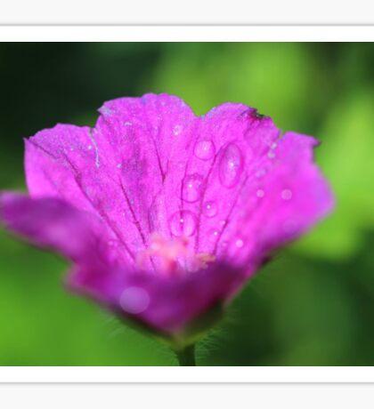 Macro photograph- pink flower Sticker