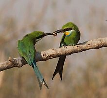 Courtship feed by Michelle Sole