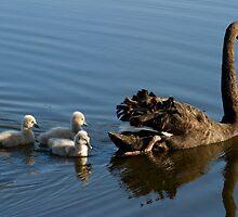 The Single Mum by byronbackyard