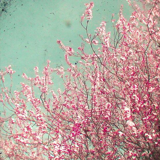 Blossom by Cassia