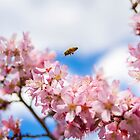 Bee on Sakura by hinting