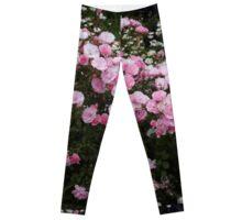 Pink roses: Bonica in bloom. Leggings
