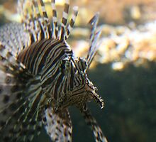 Lion Fish by Jack Butcher