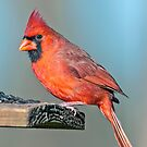 Mr. Northern Cardinal Makes a Pitstop by Bonnie T.  Barry