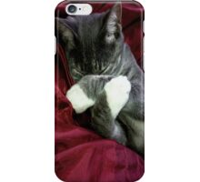 Cute Kitten Phone Case iPhone Case/Skin