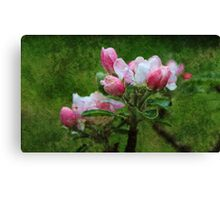 Oil style pink apple flowers art photography.  Canvas Print