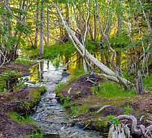 Babbling Brook by Photopa