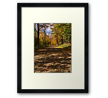 Scattered Autumn Leaves Framed Print